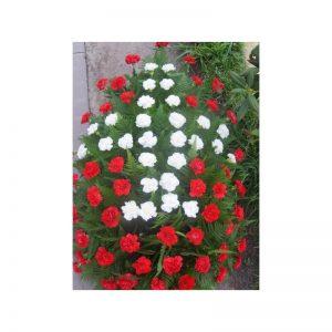 Coroana garoafe albe si rosii servicii funerare non stop bucuresti ilfov adysim